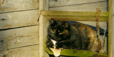 gatto anziano su legno