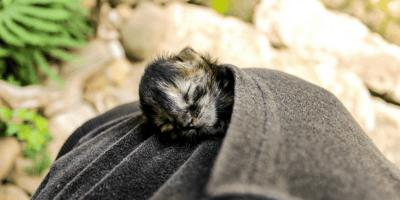 Il comportamento dei gattini appena nati