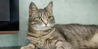 gatto-guarda-di-profilo
