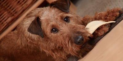 I rischi e i benefici della dieta BARF per cani