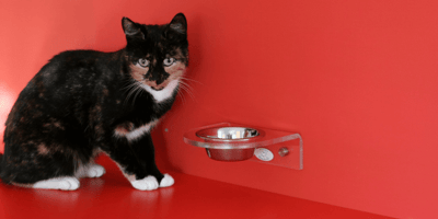 L'inappetenza del gatto è un problema?
