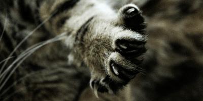 Come tagliare le unghie al gatto?