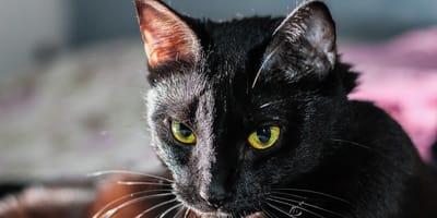 Epilessia del gatto: consigli su come affrontarla al meglio