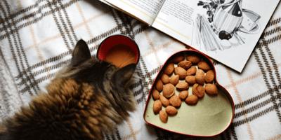 5 ricette fatte in casa per gatti