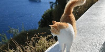 gatto su muretto al mare