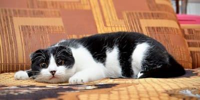I parassiti intestinali del gatto: cause e rimedi