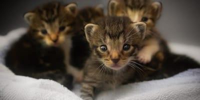 Gattini appena nati: come gestire i cuccioli nelle primissime fasi di vita