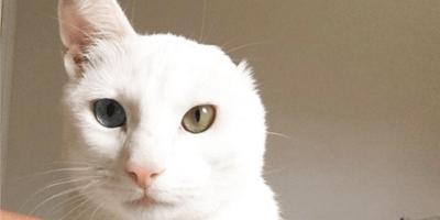 Gattina con un orecchio solo