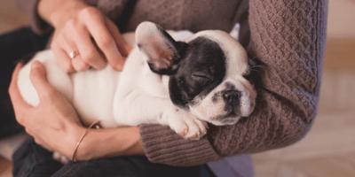 Cucciolo di cane in braccio al padrone