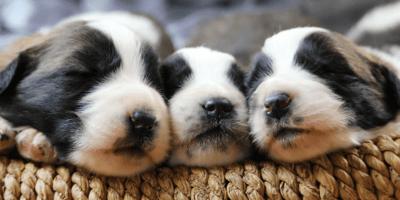 Cosa sapere sui primi giorni con un cucciolo di cane?