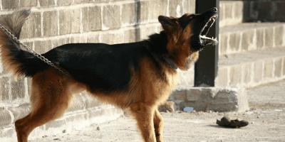Cane che abbaia per strada