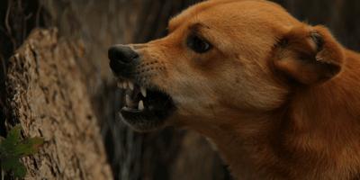 Cane aggressivo che ringhia di profilo