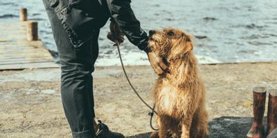 Addestramento del cane: insegna al tuo cane a viaggiare