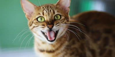 I gatti cambiano i denti? Tutto quello che c'è da sapere!