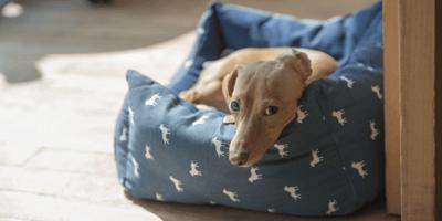 Cane triste nella sua cuccia
