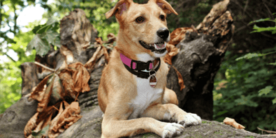 Cane su un albero con guinzaglio al collo