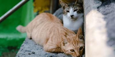 Gattini che si nascondono su un muretto