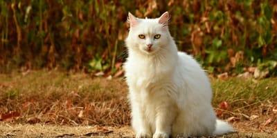 Gatto bianco in un bosco