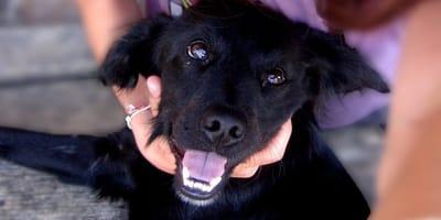 L'importanza di una corretta pulizia dei denti del cane