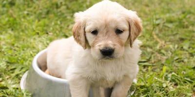 Dove acquistare un cucciolo di cane e quali carte preparare?