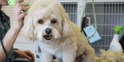 Toelettatura per cani: come diventare toelettatore in 3 passi