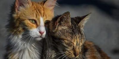 Gattini che si fanno le moine