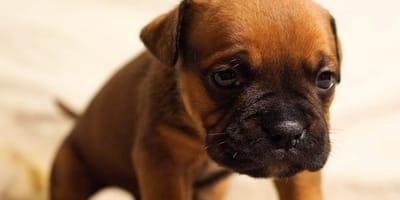 cucciolo-di-cane