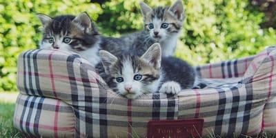Cosa fare per adottare un gatto?