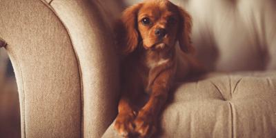 cane-sdraiato-su-un-divano