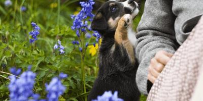I primi giorni con i tuoi cuccioli