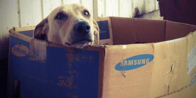 cane-dentro-una-grande-scatola