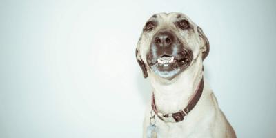 Collari per cani: scegli bene!