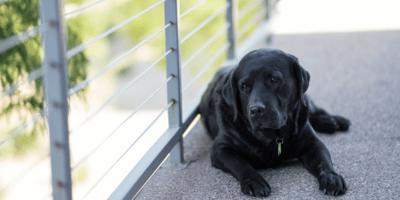 A cosa servono le medagliette per cani?