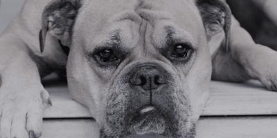 Cosa fare in caso di lacrimazione degli occhi del cane?