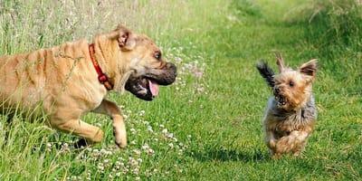 Il mio cane ha paura degli altri cani