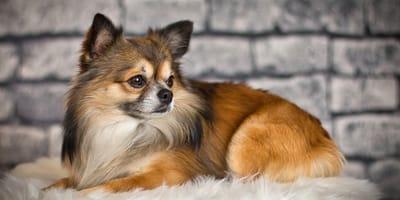 Come curare il pelo del cane: 7 consigli utili