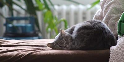 gatto solo in casa
