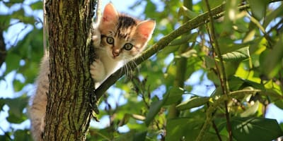 4 abitudini pericolose dei gatti