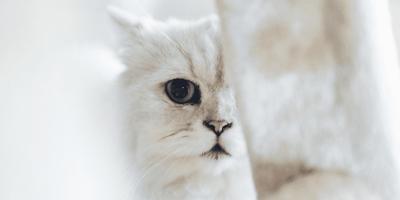Metà muso di un gattino bianco
