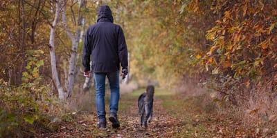 Padrone che passeggia il cane nel bosco