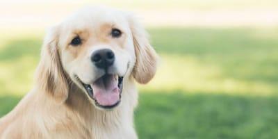 Carattere del cane: che personalità ha il tuo?