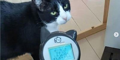 Gatto davanti apparecchio con scritte in giapponese
