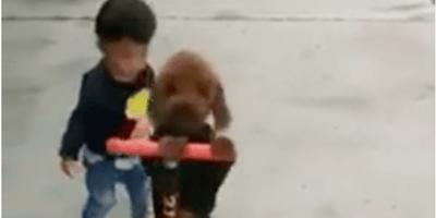 """Il video del cane """"ladro di monopattino"""" fa il giro del web"""