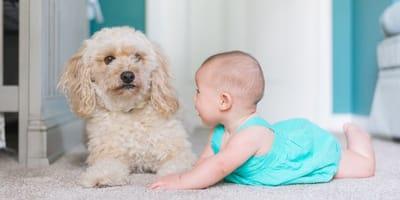 I giochi per migliorare la comunicazione cani-bambini