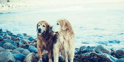 Due cani bagnati davanti al mare