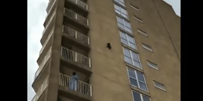 Gatto aggrappato al muro di un palazzo