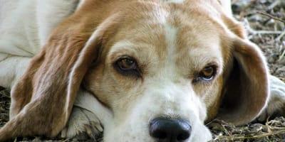 cane-anziano-triste