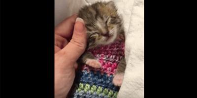 Gattina minuscola riscaldata da un maglioncino