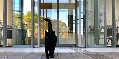 gatto-nero-passeggia