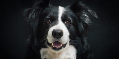 cane bianco-e-nero
